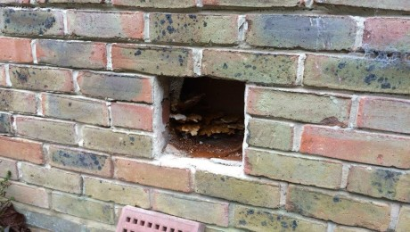 Dry rot hidden behind an air brick