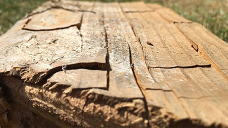 Affected Timber