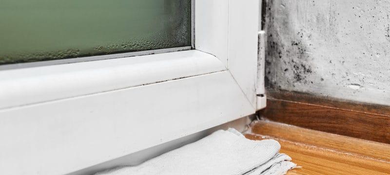 Condensation in cellar