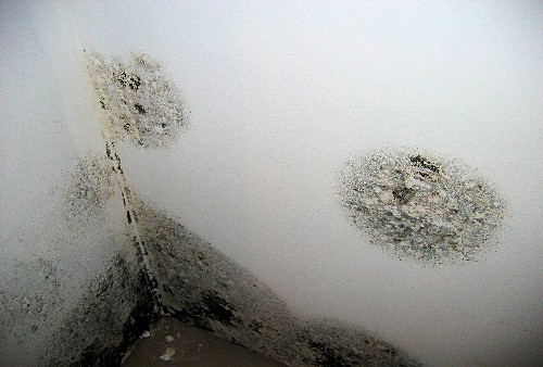 Condensation black spot mould
