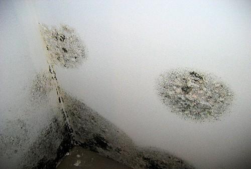 Surveyors Fotofile Condensation Black Spot Mould Timberwise