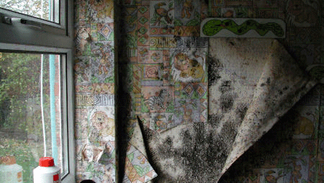 Damaged wallpaper as a result of damp
