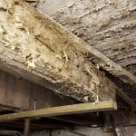 Dry rot on timbers