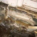 Dry rot attacking timber