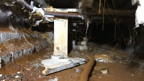 Dry rot spores in a basement