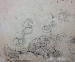 Black Spot Mould caused by condensatrion
