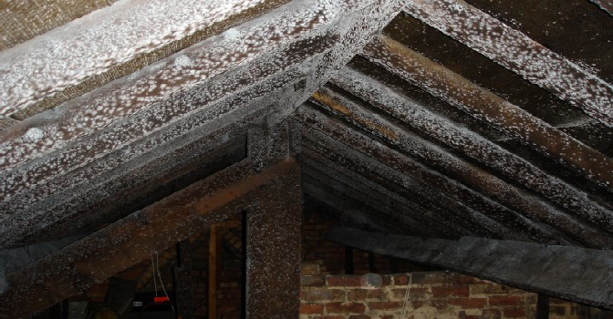 Mouldy timbers is a roof space caused by poor ventilation and condensation