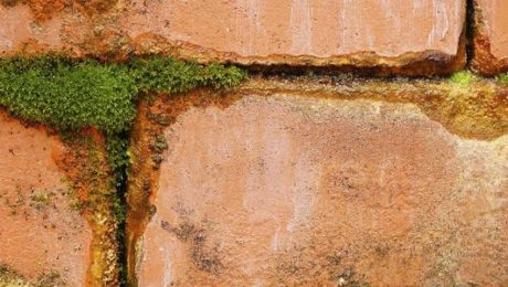 Signs of penetrating damp