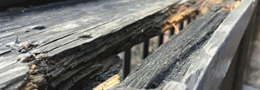 Wet rot damaging timber