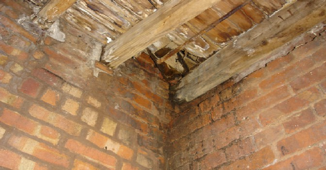 Surveyors Fotofile Wet Rot Identification And Treatments