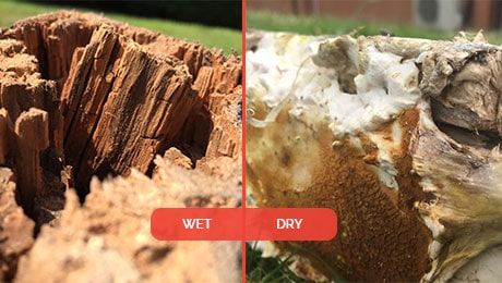 Wet Rot -vs-Dry Rot