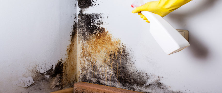 black mould removal on wall