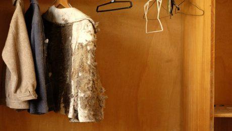 damp in wardrobe