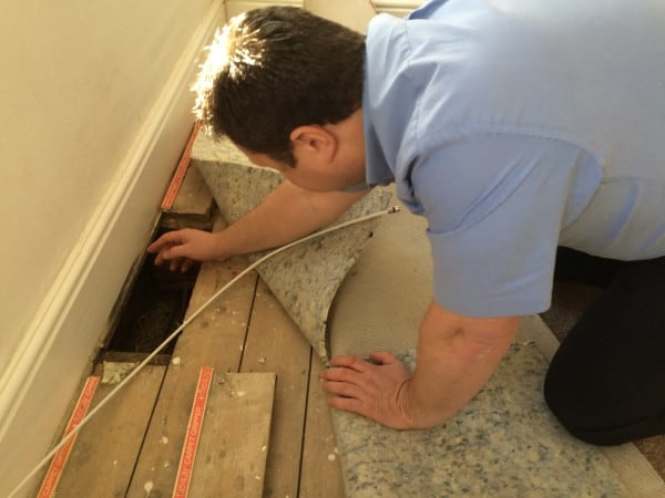 A Devon survey inspecting floorboards for dry rot