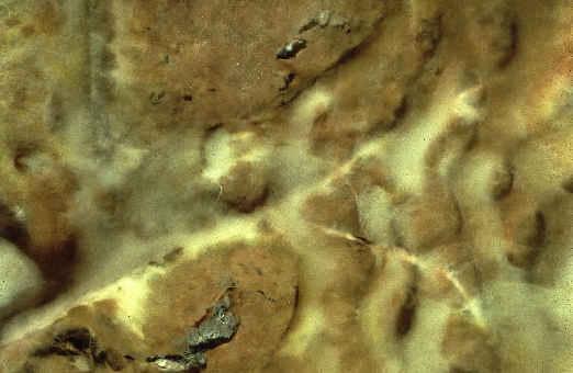 Dry rot mycelium growth