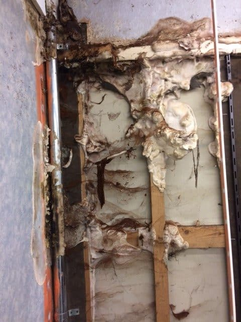 Dry Rot In An Old Shoe Shop Timberwise