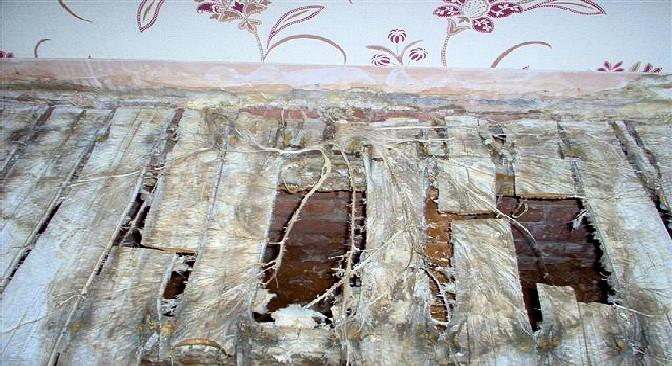 Surveyors Fotofile True Dry Rot Fungus Timberwise