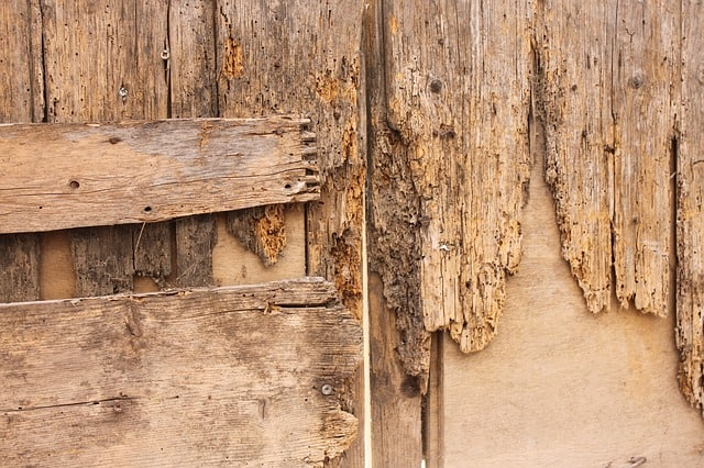 Brittle wood, woodworm infesation
