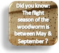 woodworm flight season